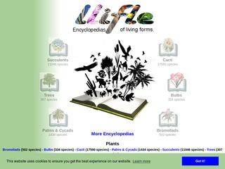 http://www.llifle.com/Encyclopedia/CACTI